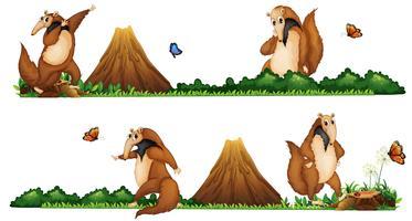 Anteaters går i fältet