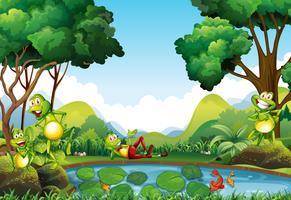 Frösche, die am Teich leben