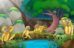 Fyra gibbons i skogen