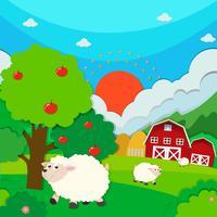 Schafe laufen auf dem Feld