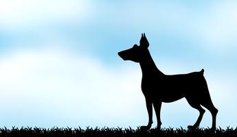 Schattenbildwindhund auf dem Feld