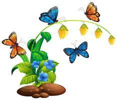 Schmetterlinge fliegen um die Pflanze vektor