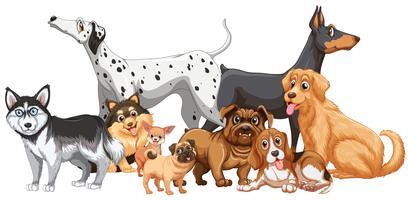 Grupp av olika slags hundar