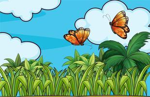 Fjärilar som flyger i trädgården