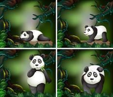 Panda i den mörka skogen vektor