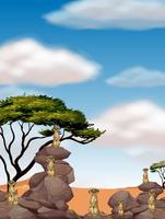 Erdmännchen stehen auf großen Felsen vektor