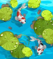 Två fiskar som simmar i dammen