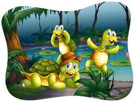 Tre sköldpaddor som bor vid dammen