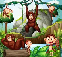 Olika typer av apor i skogen
