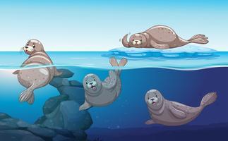 Seehunde schwimmen im Meer vektor