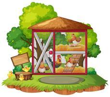 Många kycklingar i coop
