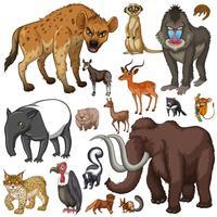 Olika slags vilda djur