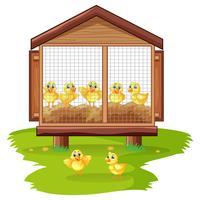 Lilla kycklingar i kyckling coop