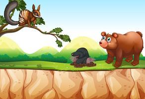 Tiere und Klippe