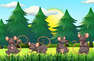 Vier Ratten auf dem Feld