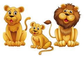 Lejonfamilj med en vuxen
