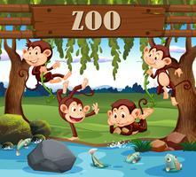En apafamilj i djurparken
