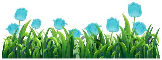Blå tulpanblommor i den gröna busken