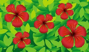Röda hibicusblommor i busken vektor
