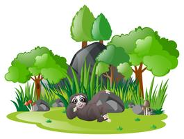 Sloth slappna av i parken