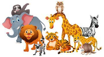 Olika typer av vilda djur på vit bakgrund