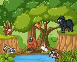 Många vilda djur i skogen vektor