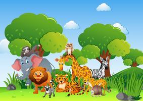 Vilda djur i fältet vektor