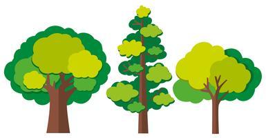 Olika typer av träd vektor