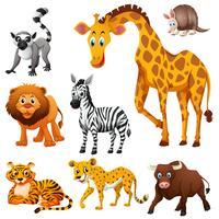 Olika typer av vilda djur