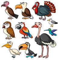 Verschiedene Arten von Wildvögeln vektor