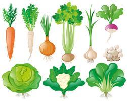 Olika typer av grönsaker vektor