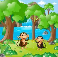 Två apor i skogen vektor