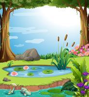 Skogscen med fisk i dammen