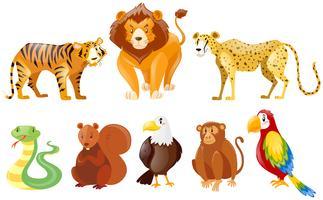 Set verschiedene wilde Tiere vektor