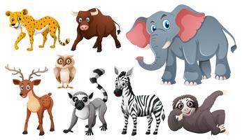 Många vilda djur på vit bakgrund