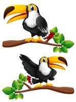 Två toucanfåglar på grenar