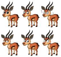 Gazelle med olika ansiktsuttryck vektor