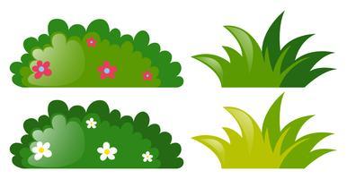 Vier Büsche mit und ohne Blumen
