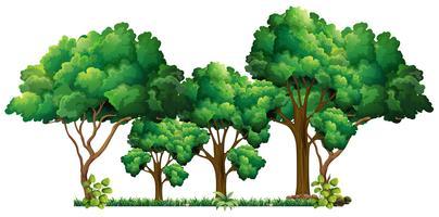 Scen med många träd