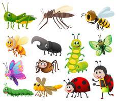 Olika slags insekter på vit bakgrund