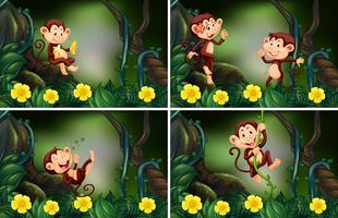 Apor som bor i skogen