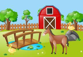 Gårdsplats med häst och ankor