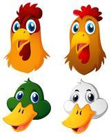 Köpfe von Hühnern und Enten vektor