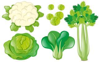 Olika typer av grönsaker