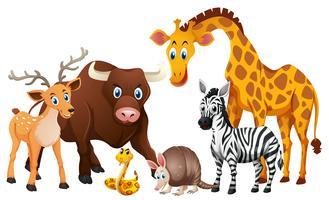Vilda djur på vit bakgrund
