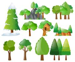 Olika typer av träd
