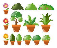 Olika typer av växter i kruka