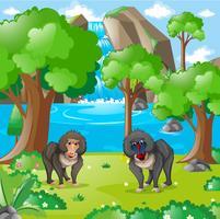 Paviane, die in der Wildnis leben