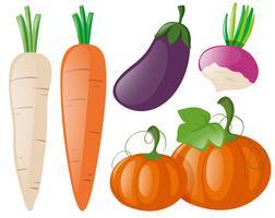 Verschiedene Arten von frischem Gemüse vektor