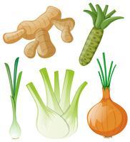 Olika typer av rotgrönsaker på vitt vektor